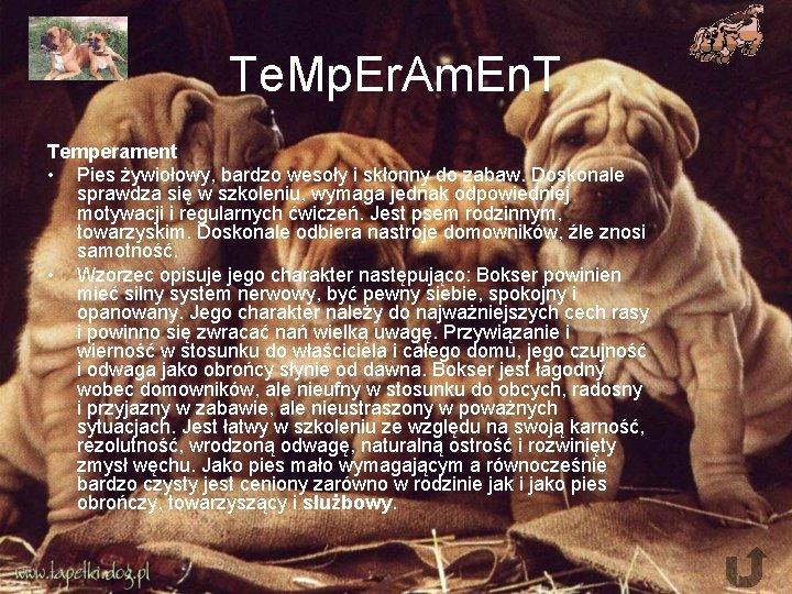 Te. Mp. Er. Am. En. T Temperament • Pies żywiołowy, bardzo wesoły i skłonny