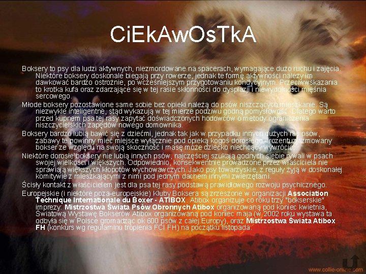 Ci. Ek. Aw. Os. Tk. A Boksery to psy dla ludzi aktywnych, niezmordowane na