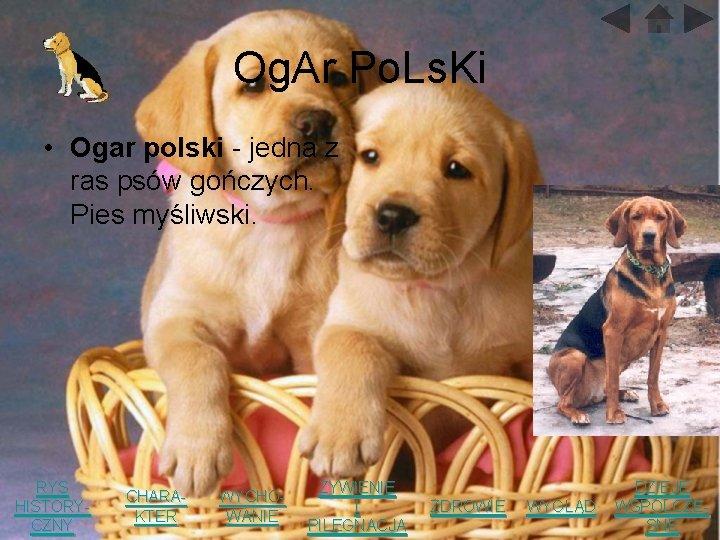Og. Ar Po. Ls. Ki • Ogar polski - jedna z ras psów gończych.