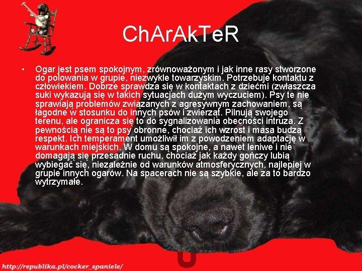 Ch. Ar. Ak. Te. R • Ogar jest psem spokojnym, zrównoważonym i jak inne