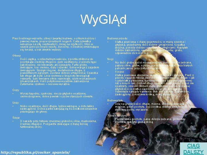 Wy. GlĄd Pies średniego wzrostu, silnej i zwartej budowy, o silnym kośćcu i pewnej