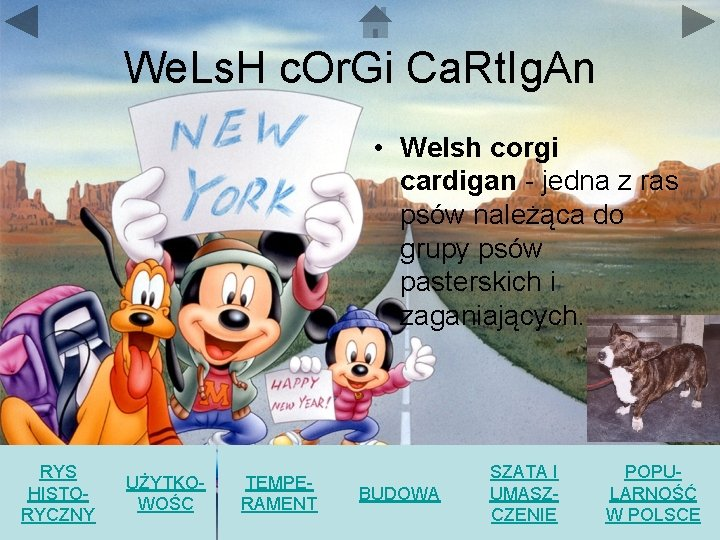 We. Ls. H c. Or. Gi Ca. Rt. Ig. An • Welsh corgi cardigan