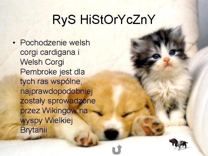 Ry. S Hi. St. Or. Yc. Zn. Y • Pochodzenie welsh corgi cardigana i