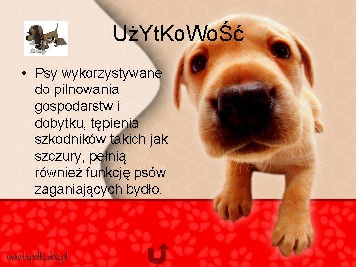 UżYt. Ko. WoŚć • Psy wykorzystywane do pilnowania gospodarstw i dobytku, tępienia szkodników takich