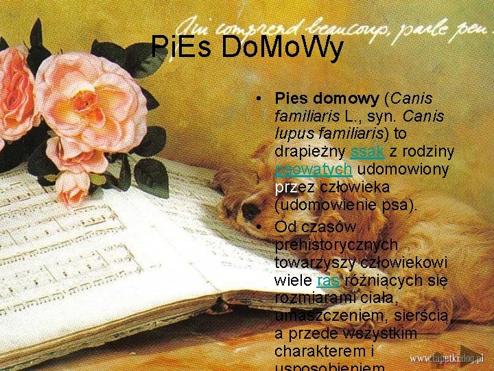 Pi. Es Do. Mo. Wy • Pies domowy (Canis familiaris L. , syn. Canis
