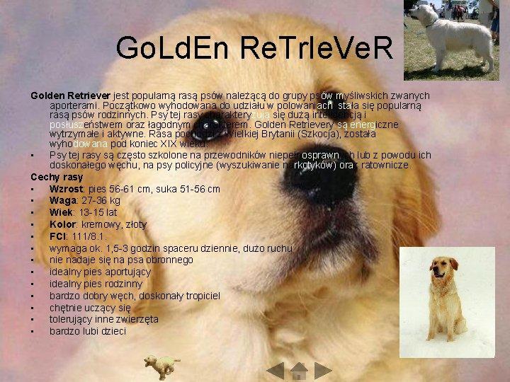 Go. Ld. En Re. Tr. Ie. Ve. R Golden Retriever jest popularną rasą psów