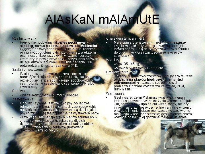 Al. As. Ka. N m. Al. Am. Ut. E Rys historyczny • Pierwotnie hodowany