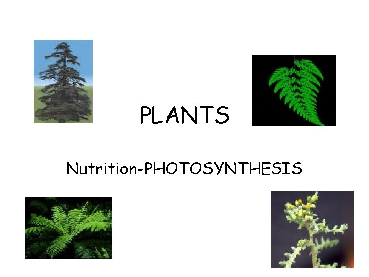 PLANTS Nutrition-PHOTOSYNTHESIS