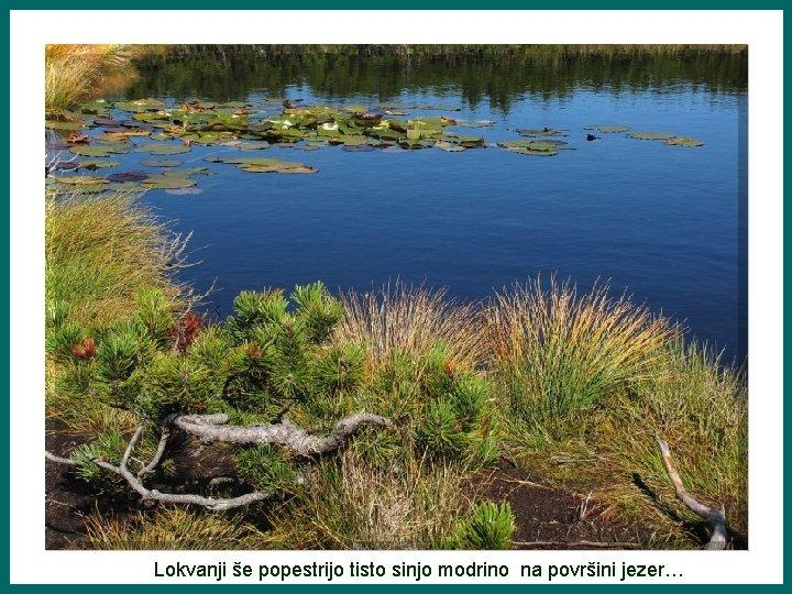 Lokvanji še popestrijo tisto sinjo modrino na površini jezer…