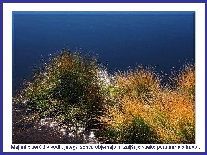 Majhni biserčki v vodi ujetega sonca objemajo in zaljšajo vsako porumenelo travo.