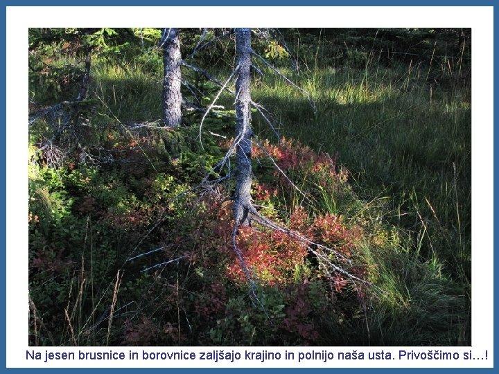 Na jesen brusnice in borovnice zaljšajo krajino in polnijo naša usta. Privoščimo si…!