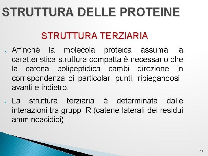 STRUTTURA DELLE PROTEINE STRUTTURA TERZIARIA ● ● Affinché la molecola proteica assuma la caratteristica