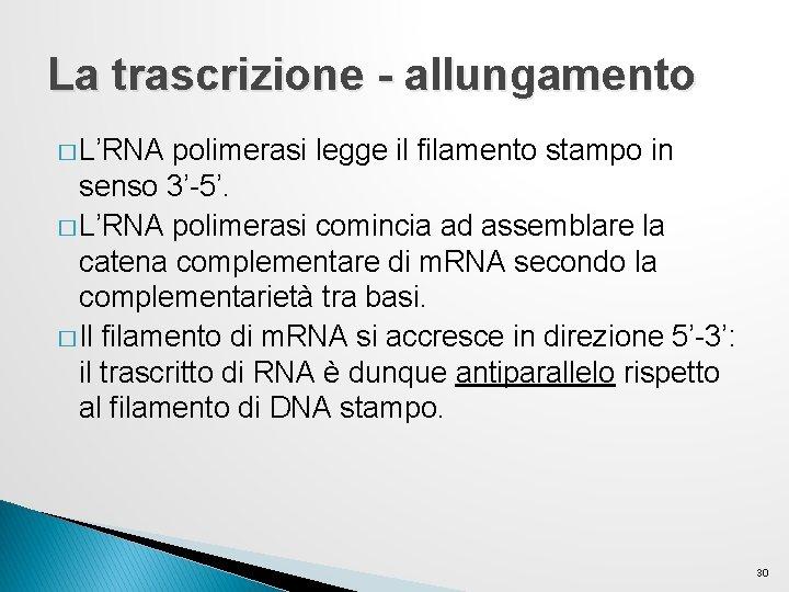 La trascrizione - allungamento � L'RNA polimerasi legge il filamento stampo in senso 3'-5'.