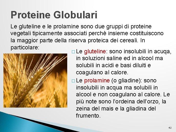 Proteine Globulari Le gluteline e le prolamine sono due gruppi di proteine vegetali tipicamente