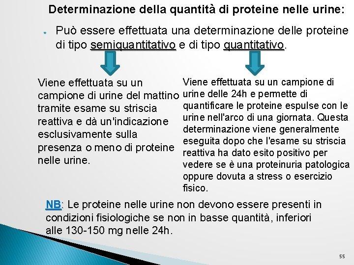 Determinazione della quantità di proteine nelle urine: ● Può essere effettuata una determinazione delle