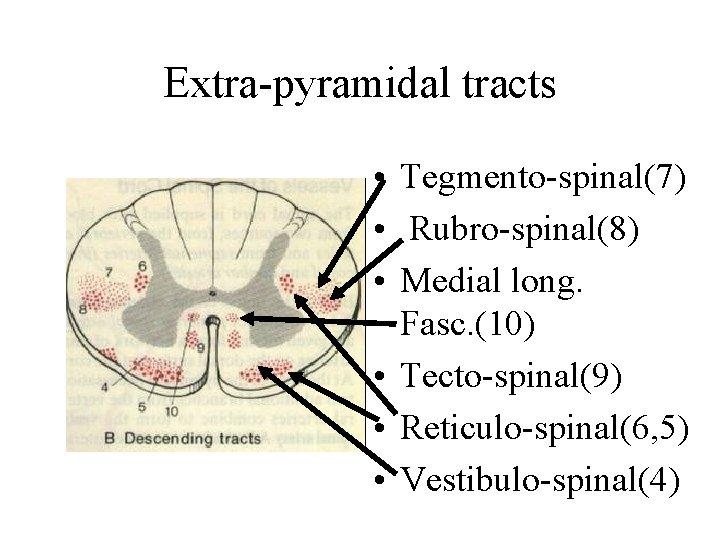 Extra-pyramidal tracts • Tegmento-spinal(7) • Rubro-spinal(8) • Medial long. Fasc. (10) • Tecto-spinal(9) •