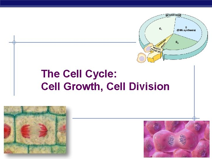 The Cell Cycle: Cell Growth, Cell Division AP Biology 2007 -2008