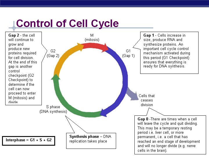 Control of Cell Cycle AP Biology