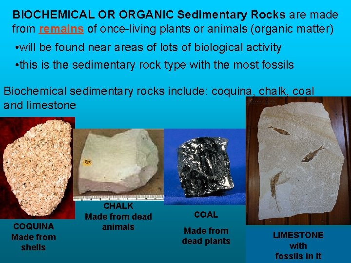 BIOCHEMICAL OR ORGANIC Sedimentary Rocks are made from remains of once-living plants or animals