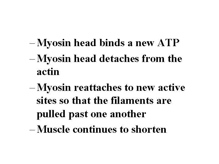 – Myosin head binds a new ATP – Myosin head detaches from the actin