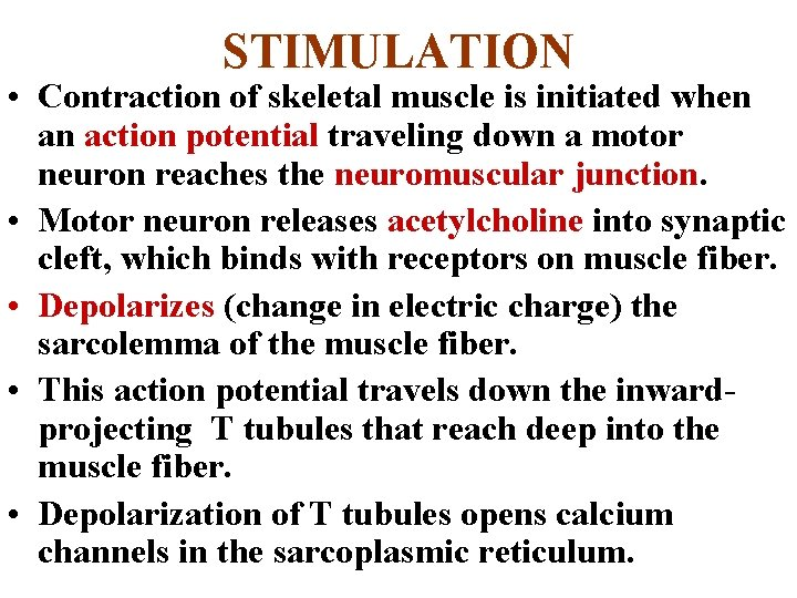 STIMULATION • Contraction of skeletal muscle is initiated when an action potential traveling down