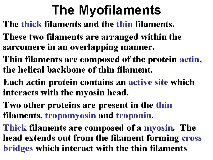 The Myofilaments The thick filaments and the thin filaments. These two filaments are arranged