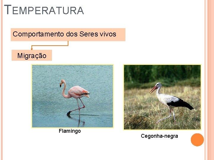 TEMPERATURA Comportamento dos Seres vivos Migração Flamingo Cegonha-negra
