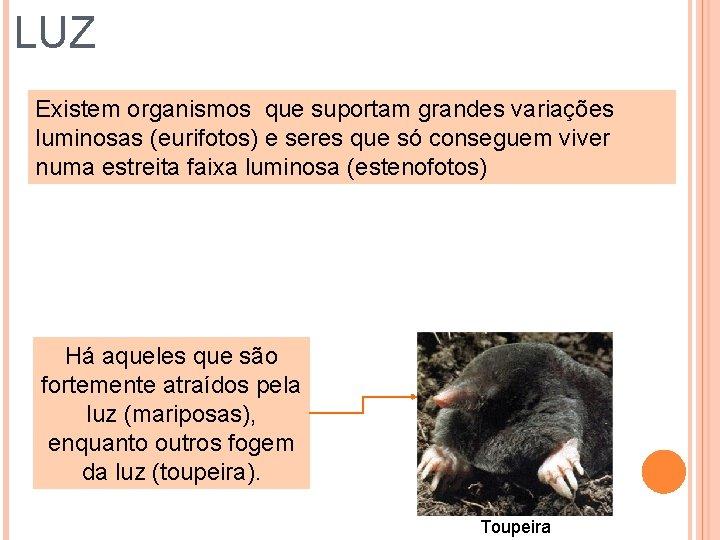 LUZ Existem organismos que suportam grandes variações luminosas (eurifotos) e seres que só conseguem