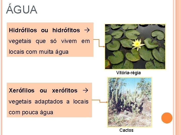 ÁGUA Hidrófilos ou hidrófitos vegetais que só vivem em locais com muita água Vitória-régia