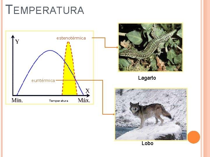 TEMPERATURA estenotérmica euritérmica Lagarto Temperatura Lobo