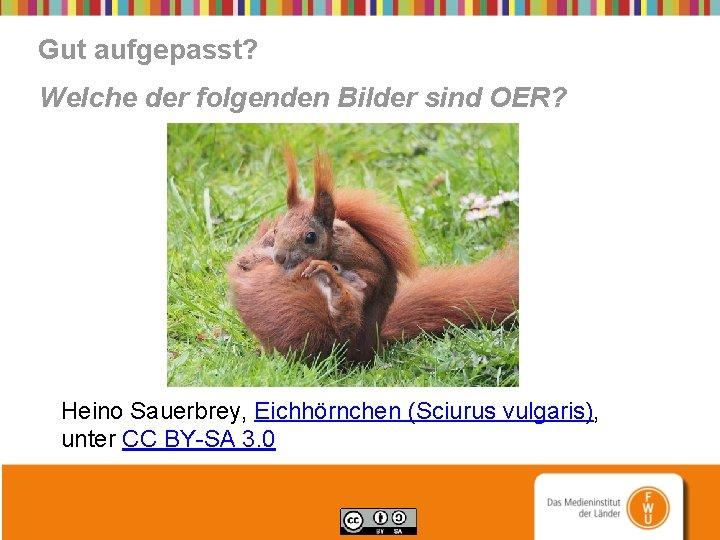 Gut aufgepasst? Welche der folgenden Bilder sind OER? Heino Sauerbrey, Eichhörnchen (Sciurus vulgaris), unter