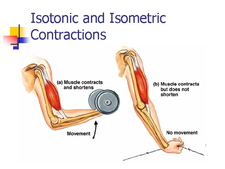 Isotonic and Isometric Contractions