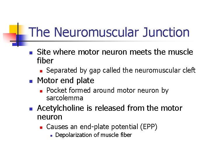 The Neuromuscular Junction n Site where motor neuron meets the muscle fiber n n