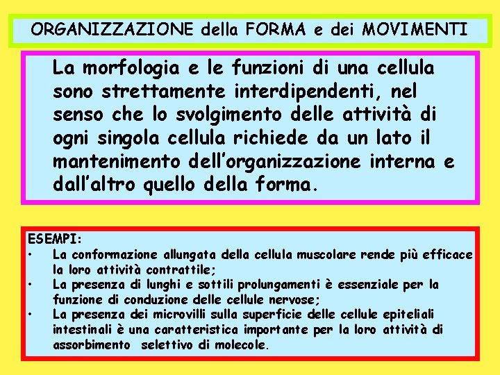 ORGANIZZAZIONE della FORMA e dei MOVIMENTI La morfologia e le funzioni di una cellula