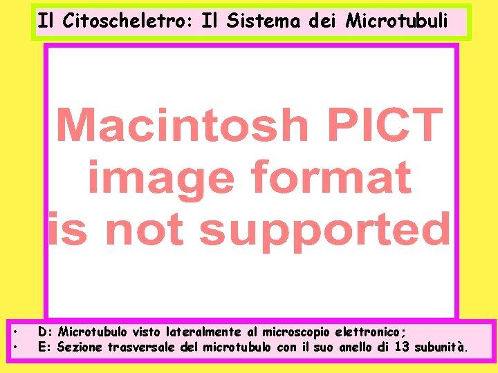 Il Citoscheletro: Il Sistema dei Microtubuli • • D: Microtubulo visto lateralmente al microscopio