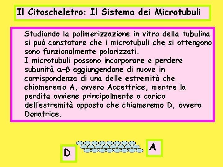 Il Citoscheletro: Il Sistema dei Microtubuli Studiando la polimerizzazione in vitro della tubulina si