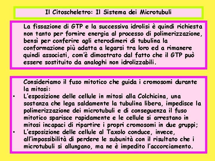 Il Citoscheletro: Il Sistema dei Microtubuli La fissazione di GTP e la successiva idrolisi
