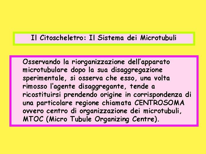 Il Citoscheletro: Il Sistema dei Microtubuli Osservando la riorganizzazione dell'apparato microtubulare dopo la sua
