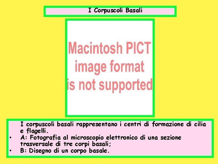 I Corpuscoli Basali • • I corpuscoli basali rappresentano i centri di formazione di