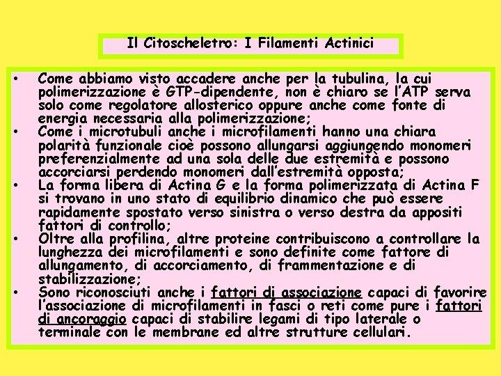 Il Citoscheletro: I Filamenti Actinici • • • Come abbiamo visto accadere anche per
