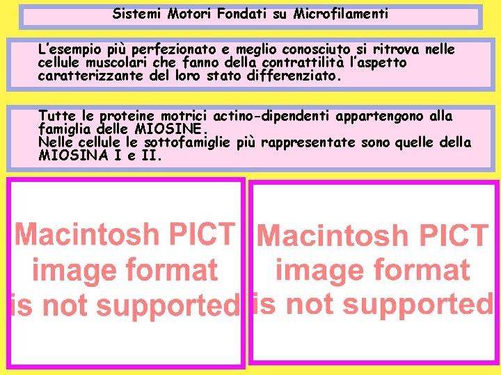 Sistemi Motori Fondati su Microfilamenti L'esempio più perfezionato e meglio conosciuto si ritrova nelle