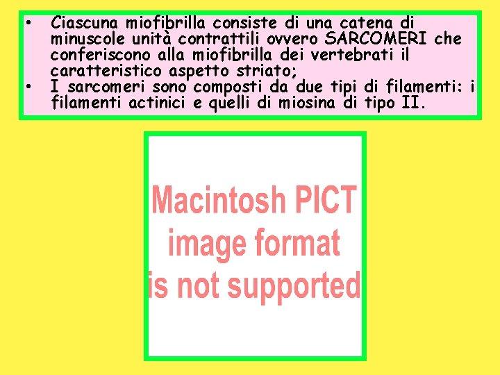 • • Ciascuna miofibrilla consiste di una catena di minuscole unità contrattili ovvero