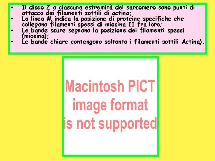 • • Il disco Z a ciascuna estremità del sarcomero sono punti di