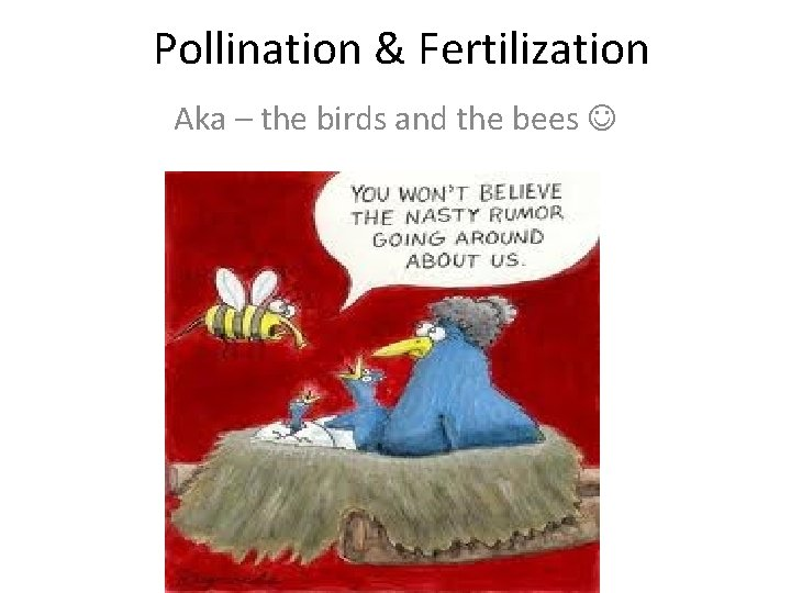 Pollination & Fertilization Aka – the birds and the bees