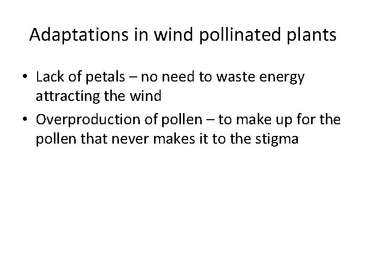 Adaptations in wind pollinated plants • Lack of petals – no need to waste