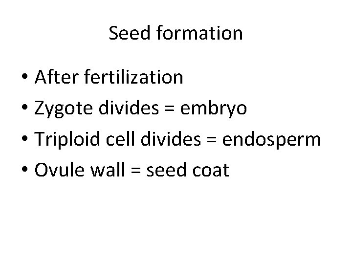 Seed formation • After fertilization • Zygote divides = embryo • Triploid cell divides