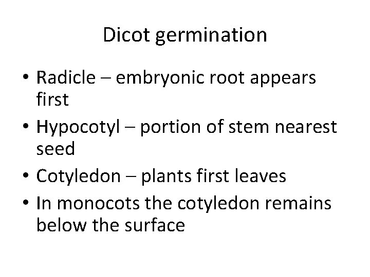Dicot germination • Radicle – embryonic root appears first • Hypocotyl – portion of