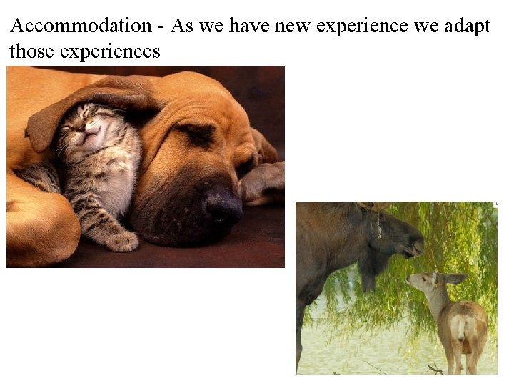 Accommodation - As we have new experience we adapt those experiences
