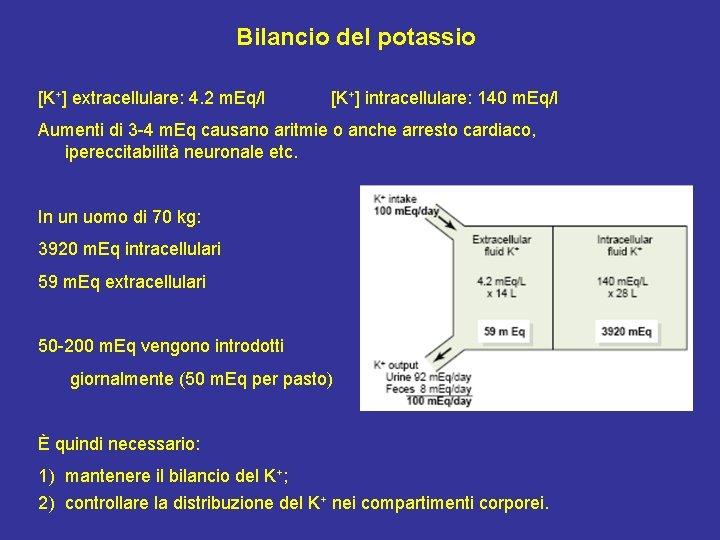 Bilancio del potassio [K+] extracellulare: 4. 2 m. Eq/l [K+] intracellulare: 140 m. Eq/l