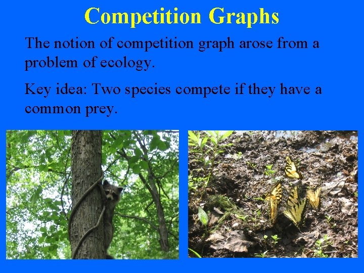Competition Graphs The notion of competition graph arose from a problem of ecology. Key